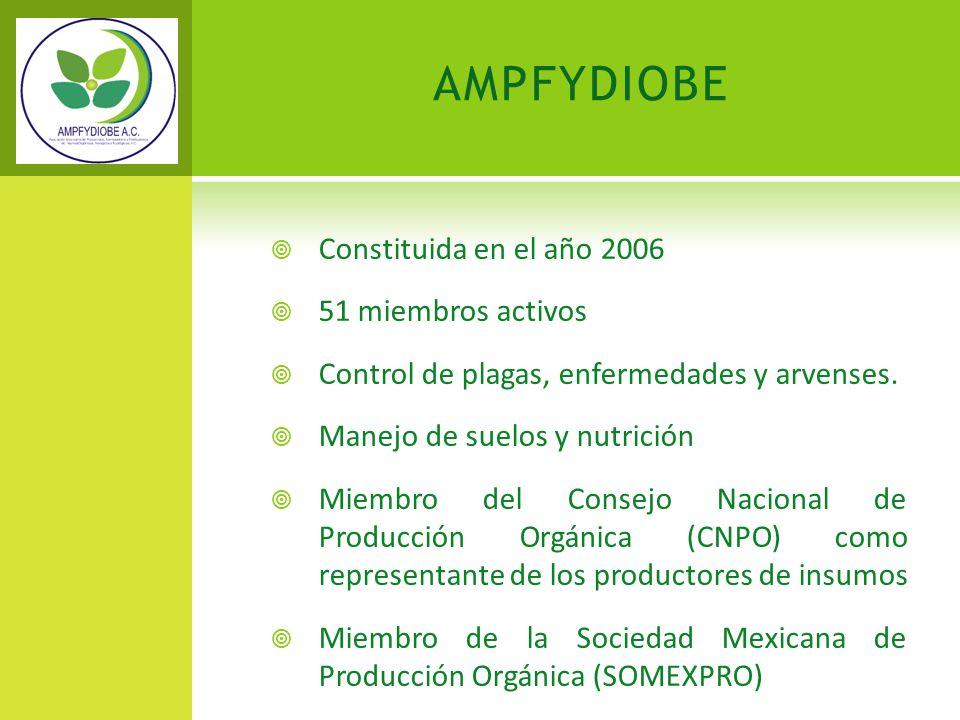 AMPFYDIOBE Constituida en el año 2006 51 miembros activos Control de plagas, enfermedades y arvenses. Manejo de suelos y nutrición Miembro del Consejo