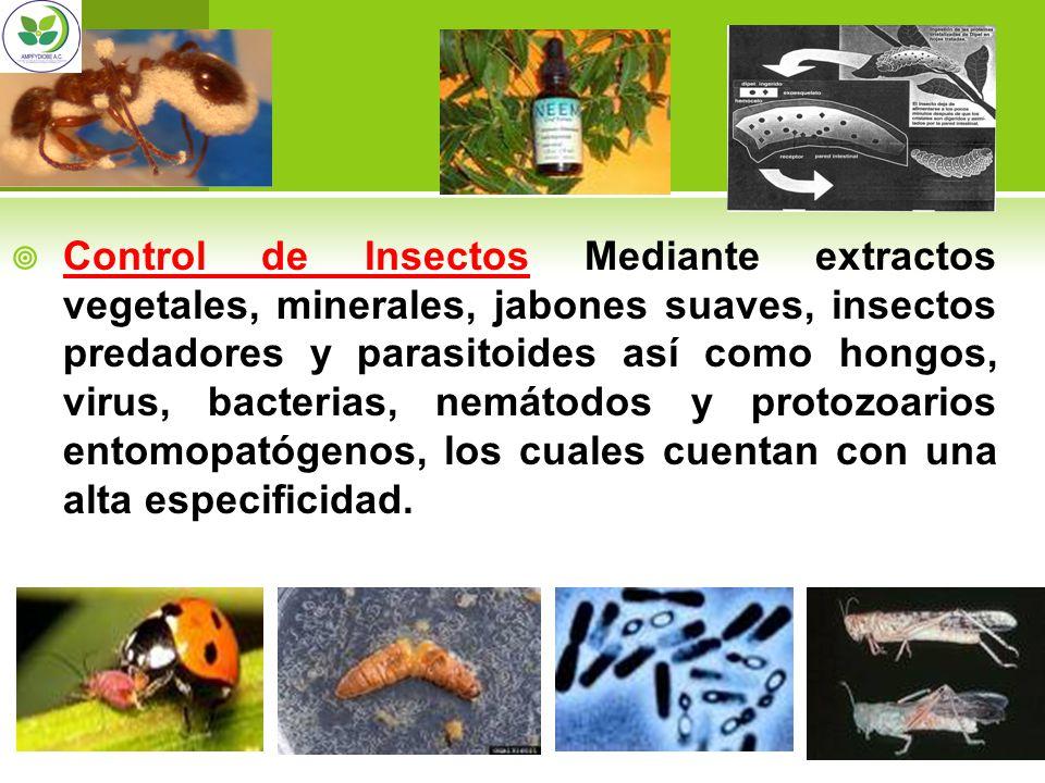 Control de Insectos Mediante extractos vegetales, minerales, jabones suaves, insectos predadores y parasitoides así como hongos, virus, bacterias, nem