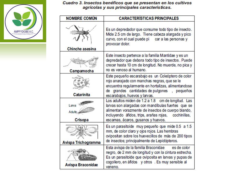 ABONOS ORGANICOS Abonos de origen animal Algas y otras materia acuatica vegetal Residuos de madera Humus De lombriz Minerales Minados Desperdicios orgánicos de casa Composta