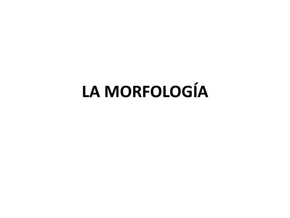 LA MORFOLOGÍA