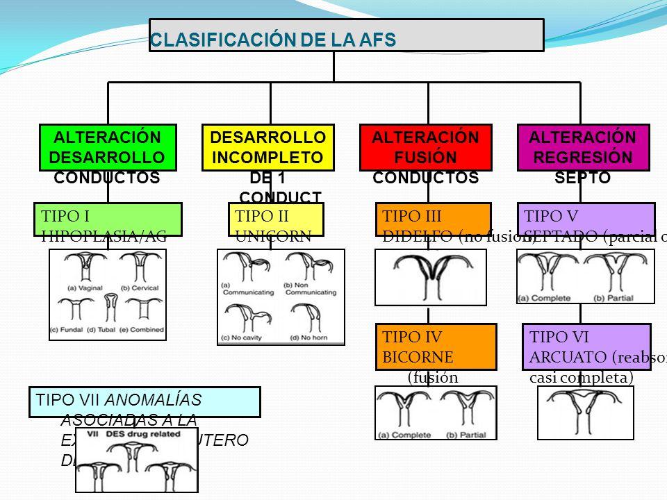 CLASIFICACIÓN DE LA AFS ALTERACIÓN DESARROLLO CONDUCTOS DESARROLLO INCOMPLETO DE 1 CONDUCT O ALTERACIÓN FUSIÓN CONDUCTOS ALTERACIÓN REGRESIÓN SEPTO TIPO I HIPOPLASIA/AG ENESIA TIPO II UNICORN E TIPO III DIDELFO (no fusión) TIPO IV BICORNE (fusión parcial) TIPO V SEPTADO (parcial o total) TIPO VI ARCUATO (reabsorción casi completa) TIPO VII ANOMALÍAS ASOCIADAS A LA EXPOSICIÓN IN UTERO DE DES