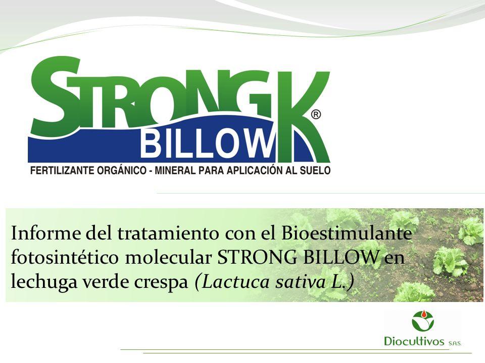 Informe del tratamiento con el Bioestimulante fotosintético molecular STRONG BILLOW en lechuga verde crespa (Lactuca sativa L.)
