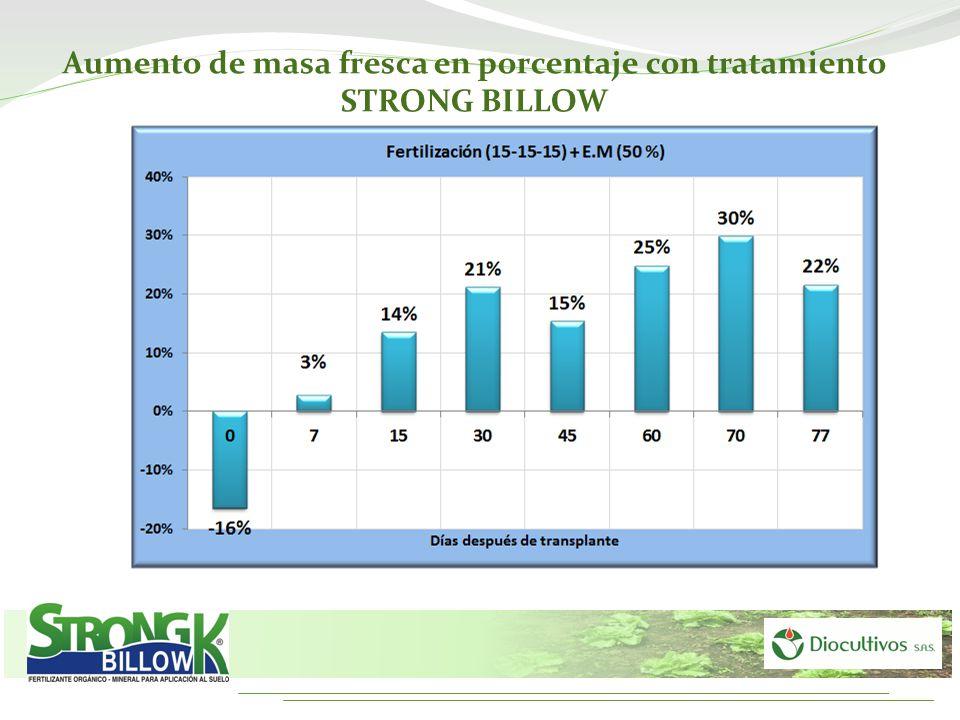 Aumento de masa fresca en porcentaje con tratamiento STRONG BILLOW