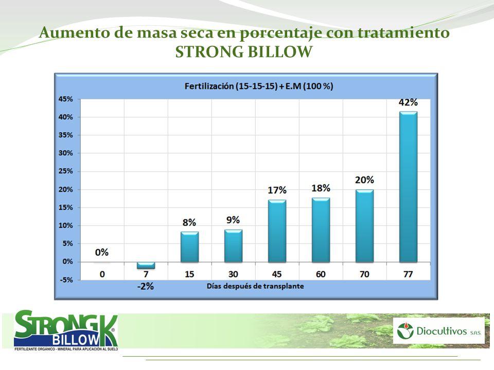 Aumento de masa seca en porcentaje con tratamiento STRONG BILLOW