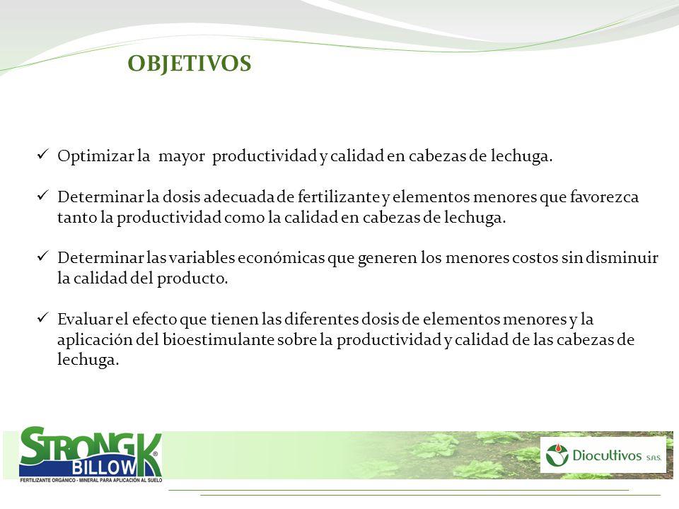 Optimizar la mayor productividad y calidad en cabezas de lechuga. Determinar la dosis adecuada de fertilizante y elementos menores que favorezca tanto