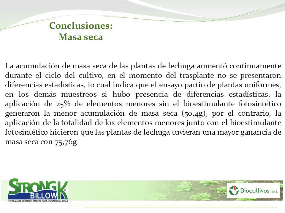Conclusiones: Masa seca La acumulación de masa seca de las plantas de lechuga aumentó continuamente durante el ciclo del cultivo, en el momento del tr