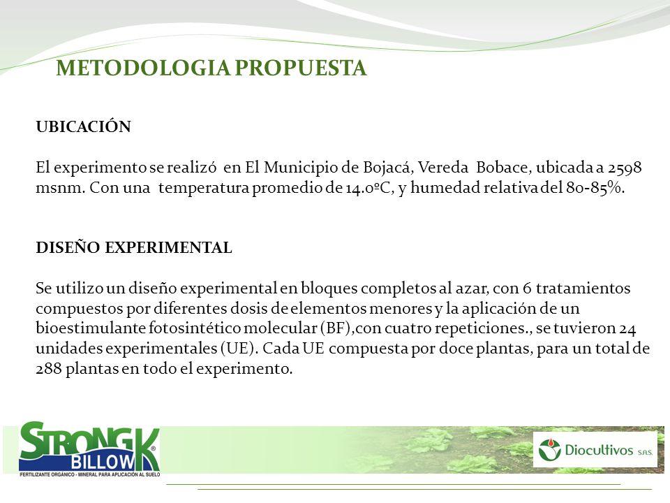 UBICACIÓN El experimento se realizó en El Municipio de Bojacá, Vereda Bobace, ubicada a 2598 msnm. Con una temperatura promedio de 14.0ºC, y humedad r