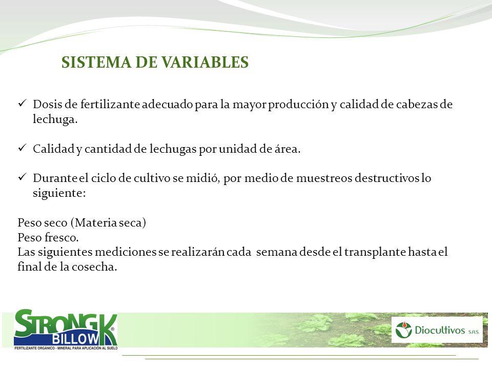 Dosis de fertilizante adecuado para la mayor producción y calidad de cabezas de lechuga. Calidad y cantidad de lechugas por unidad de área. Durante el