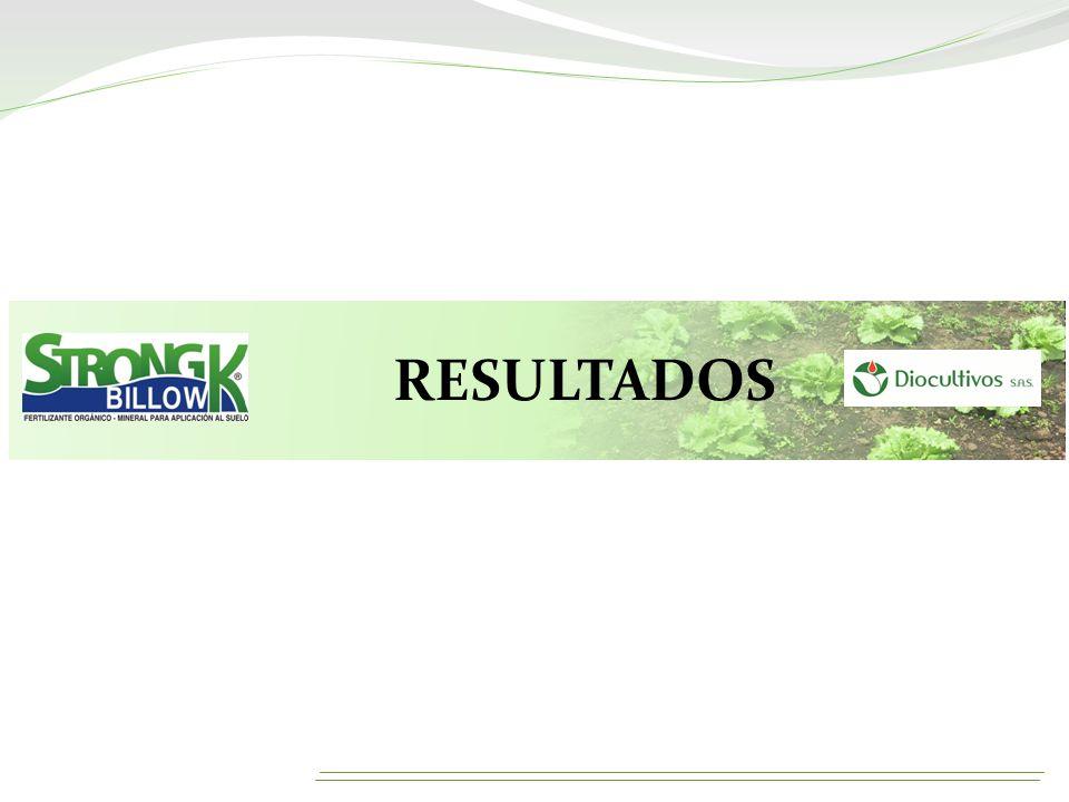 RESULTADOS (MASA FRESCA)