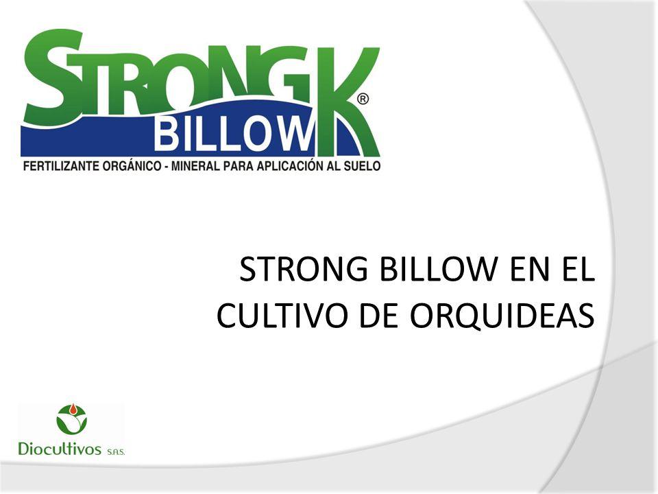 EFECTO DE STRONG BILLOW SOBRE RAICES ADVENTICIAS
