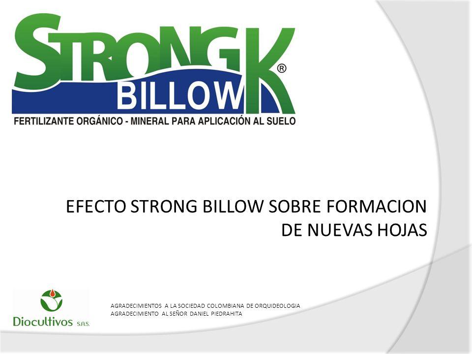 EFECTO STRONG BILLOW SOBRE FORMACION DE NUEVAS HOJAS AGRADECIMIENTOS A LA SOCIEDAD COLOMBIANA DE ORQUIDEOLOGIA AGRADECIMIENTO AL SEÑOR DANIEL PIEDRAHI