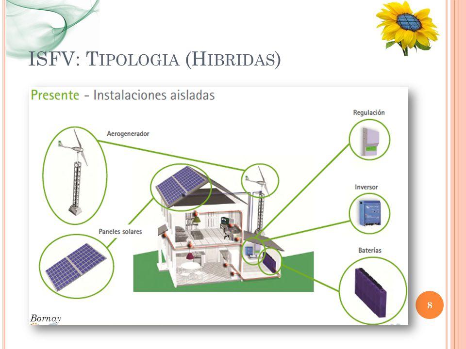ISFV: T IPOLOGIA (H IBRIDAS ) Bornay 8