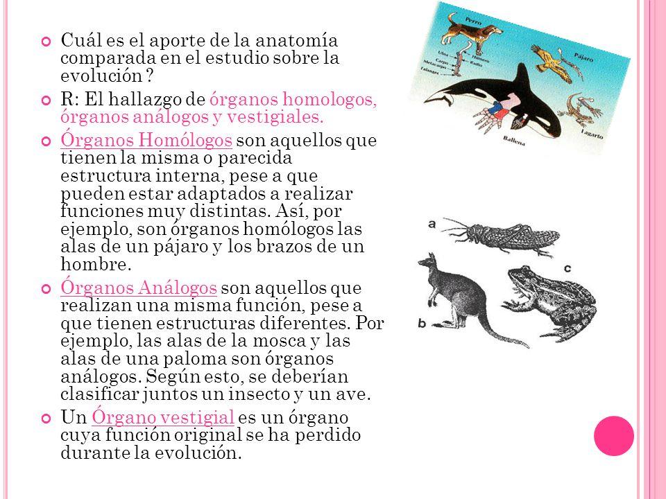 Cuál es el aporte de la anatomía comparada en el estudio sobre la evolución ? R: El hallazgo de órganos homologos, órganos análogos y vestigiales. Órg
