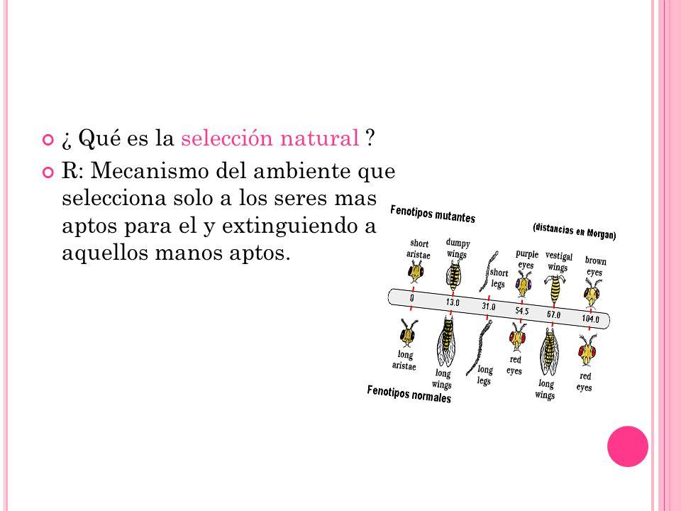 ¿ Qué es la selección natural ? R: Mecanismo del ambiente que selecciona solo a los seres mas aptos para el y extinguiendo a aquellos manos aptos.