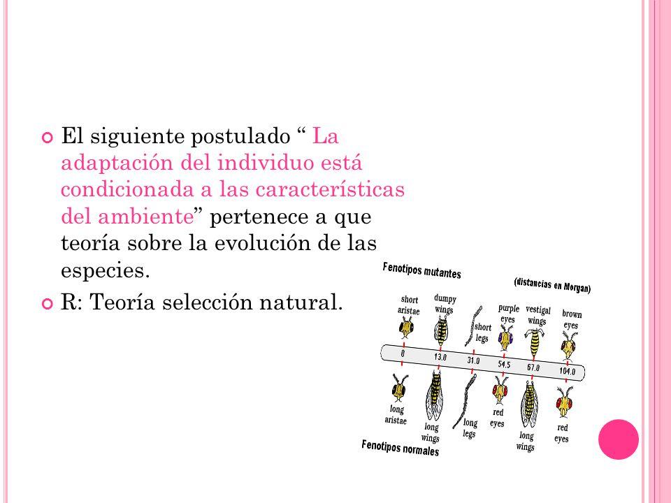 El siguiente postulado La adaptación del individuo está condicionada a las características del ambiente pertenece a que teoría sobre la evolución de l