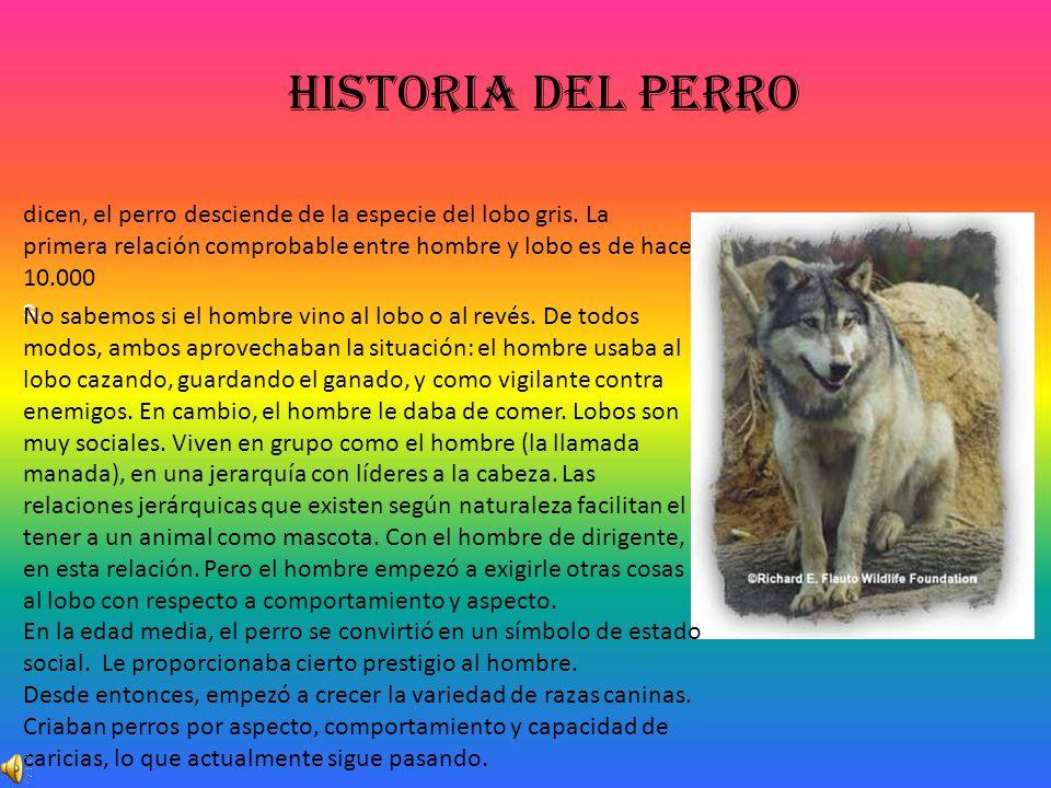 Historia del perro dicen, el perro desciende de la especie del lobo gris. La primera relación comprobable entre hombre y lobo es de hace 10.000 s. No