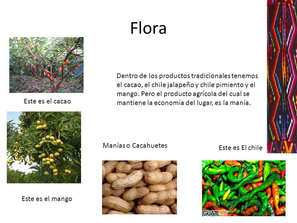 Flora Este es el cacao Este es el mango Este es El chile Dentro de los productos tradicionales tenemos el cacao, el chile jalapeño y chile pimiento y