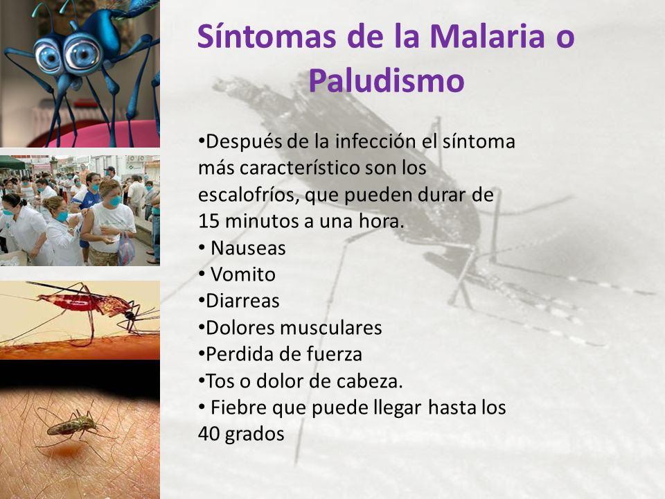 Síntomas de la Malaria o Paludismo Después de la infección el síntoma más característico son los escalofríos, que pueden durar de 15 minutos a una hor