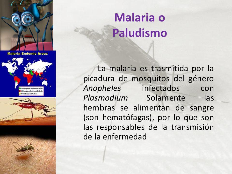 Malaria o Paludismo La malaria es trasmitida por la picadura de mosquitos del género Anopheles infectados con Plasmodium Solamente las hembras se alim