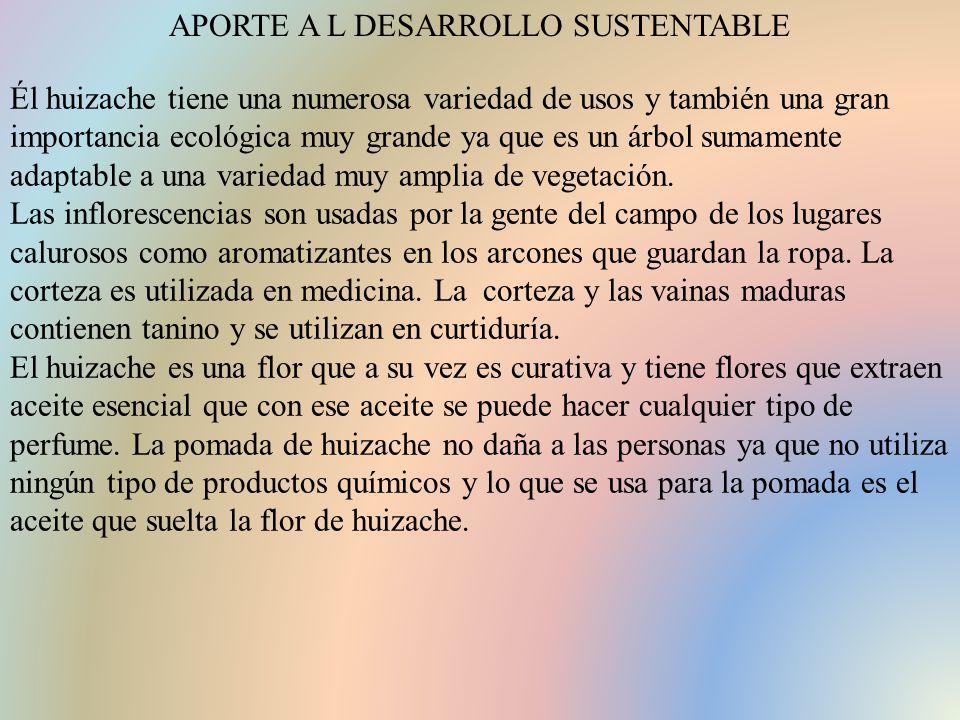 APORTE A L DESARROLLO SUSTENTABLE Él huizache tiene una numerosa variedad de usos y también una gran importancia ecológica muy grande ya que es un árbol sumamente adaptable a una variedad muy amplia de vegetación.