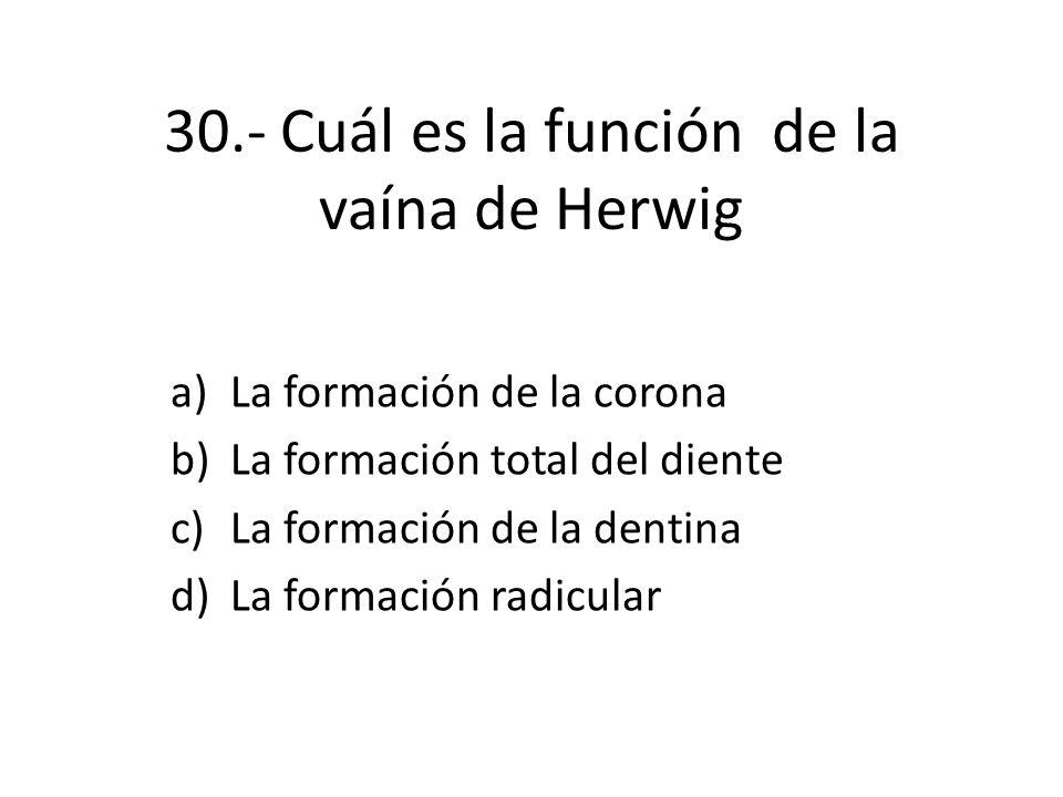 30.- Cuál es la función de la vaína de Herwig a)La formación de la corona b)La formación total del diente c)La formación de la dentina d)La formación radicular