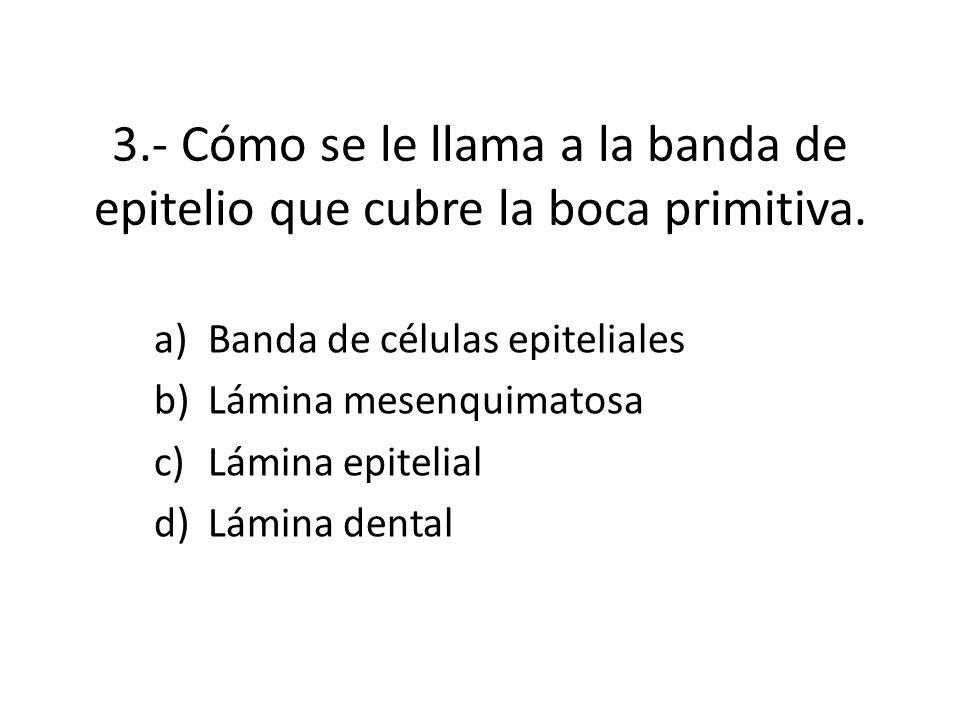 3.- Cómo se le llama a la banda de epitelio que cubre la boca primitiva.