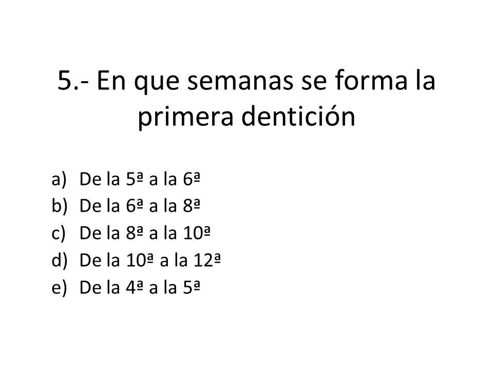 5.- En que semanas se forma la primera dentición a)De la 5ª a la 6ª b)De la 6ª a la 8ª c)De la 8ª a la 10ª d)De la 10ª a la 12ª e)De la 4ª a la 5ª