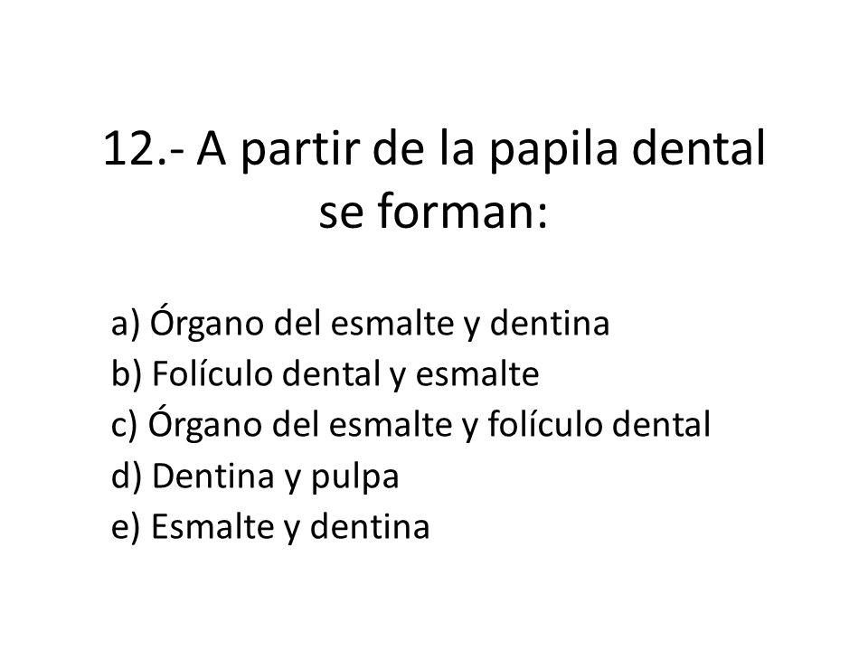 12.- A partir de la papila dental se forman: a) Órgano del esmalte y dentina b) Folículo dental y esmalte c) Órgano del esmalte y folículo dental d) Dentina y pulpa e) Esmalte y dentina