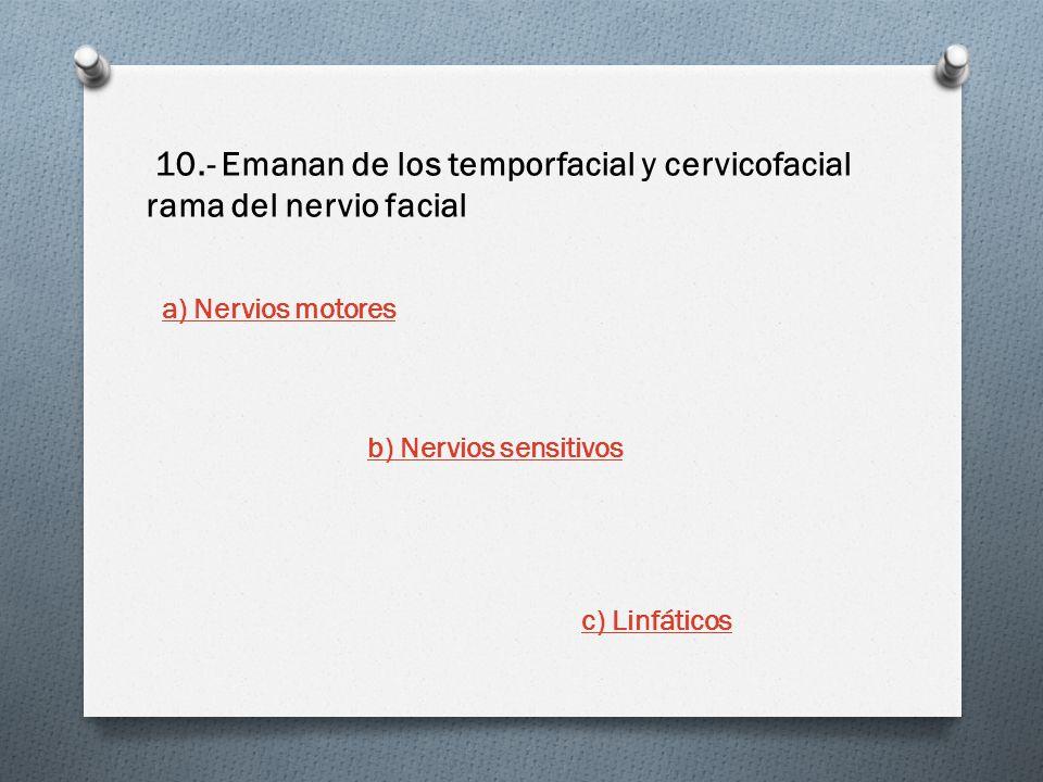 10.- Emanan de los temporfacial y cervicofacial rama del nervio facial a) Nervios motores b) Nervios sensitivos c) Linfáticos