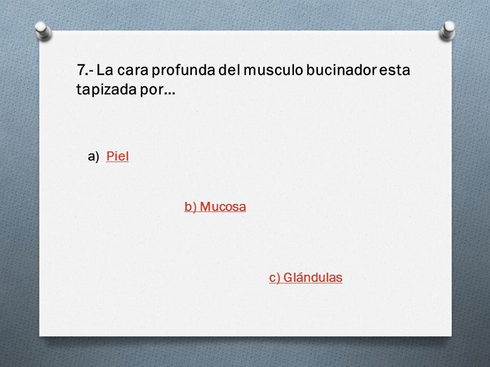 7.- La cara profunda del musculo bucinador esta tapizada por… a)PielPiel b) Mucosa c) Glándulas