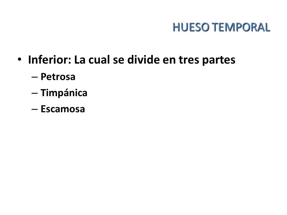 HUESO TEMPORAL Inferior: La cual se divide en tres partes – Petrosa – Timpánica – Escamosa