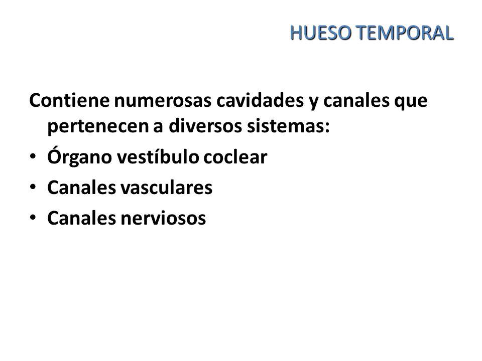 HUESO TEMPORAL Contiene numerosas cavidades y canales que pertenecen a diversos sistemas: Órgano vestíbulo coclear Canales vasculares Canales nervioso