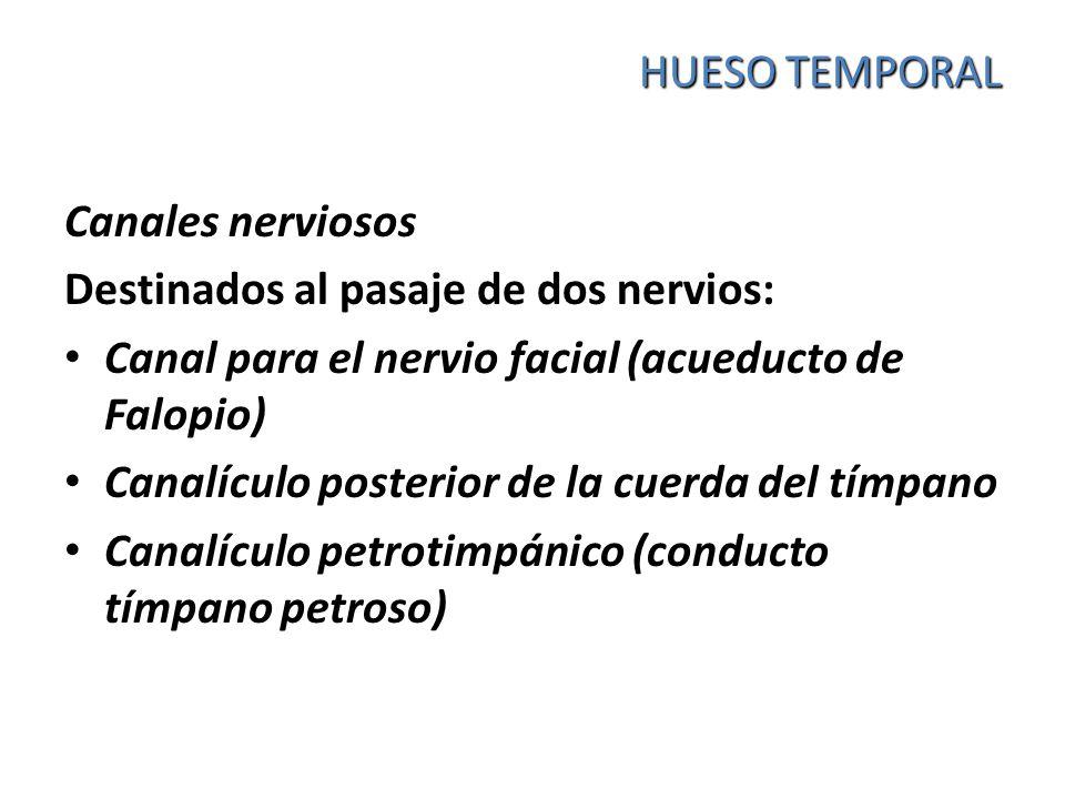 HUESO TEMPORAL Canales nerviosos Destinados al pasaje de dos nervios: Canal para el nervio facial (acueducto de Falopio) Canalículo posterior de la cu