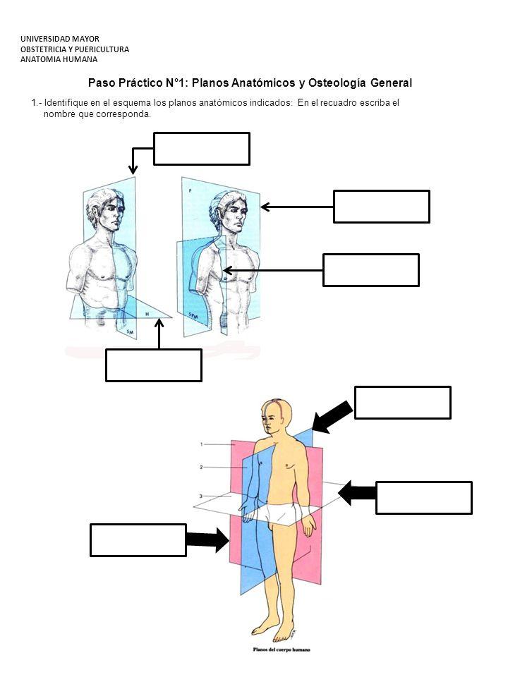 Paso Práctico N°1: Planos Anatómicos y Osteología General 1.- Identifique en el esquema los planos anatómicos indicados: En el recuadro escriba el nom