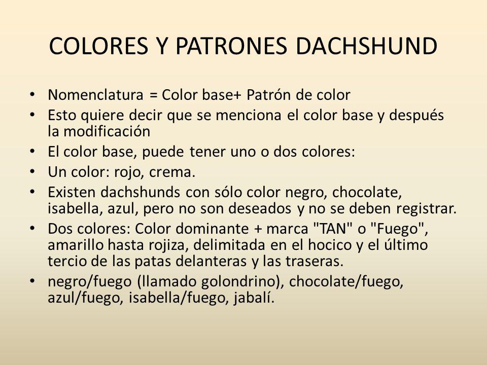 COLORES Y PATRONES DACHSHUND Nomenclatura = Color base+ Patrón de color Esto quiere decir que se menciona el color base y después la modificación El c