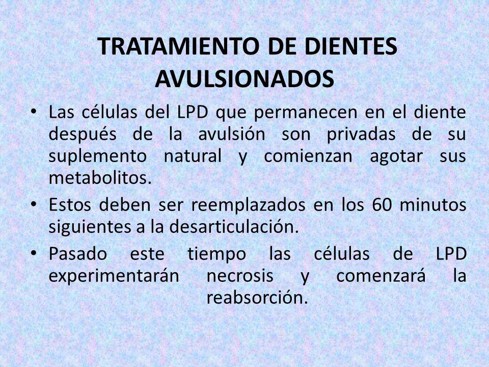 TRATAMIENTO DE DIENTES AVULSIONADOS Las células del LPD que permanecen en el diente después de la avulsión son privadas de su suplemento natural y com