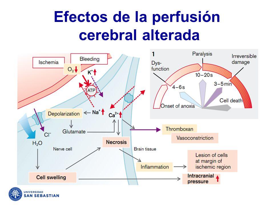 Efectos de la perfusión cerebral alterada