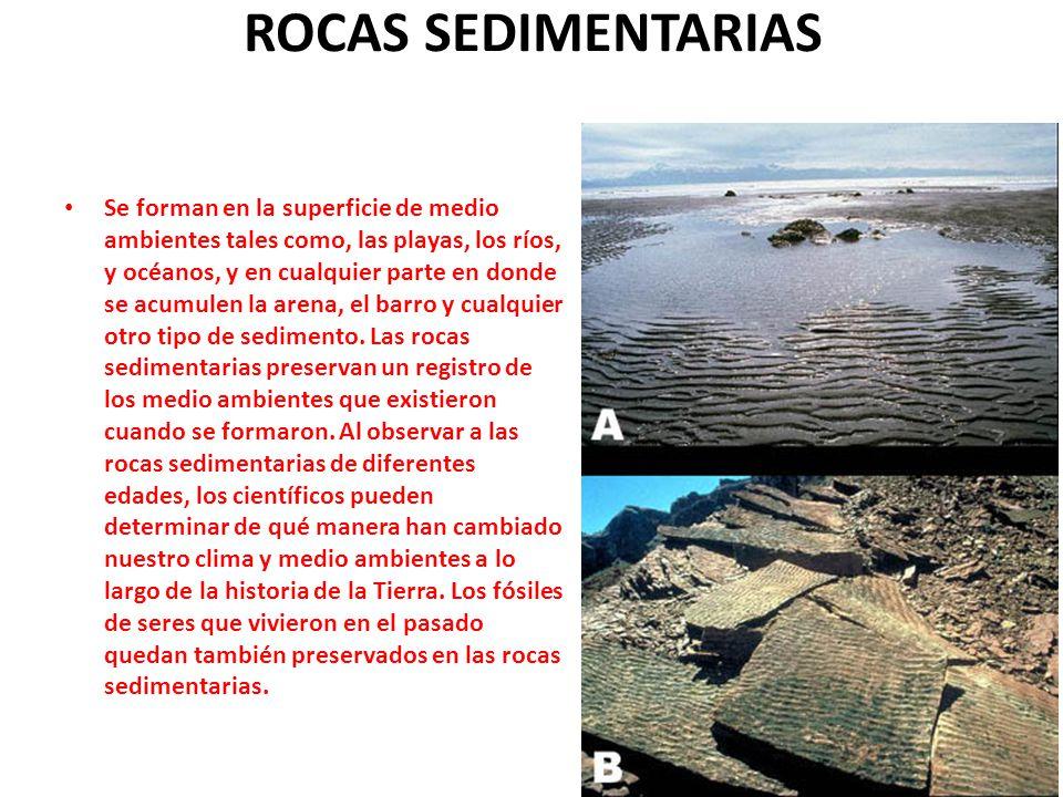 ROCAS SEDIMENTARIAS Se forman en la superficie de medio ambientes tales como, las playas, los ríos, y océanos, y en cualquier parte en donde se acumul