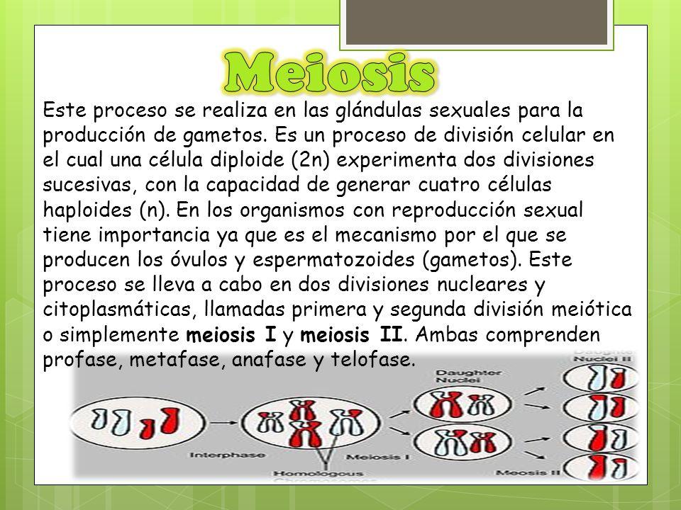 Este proceso se realiza en las glándulas sexuales para la producción de gametos. Es un proceso de división celular en el cual una célula diploide (2n)