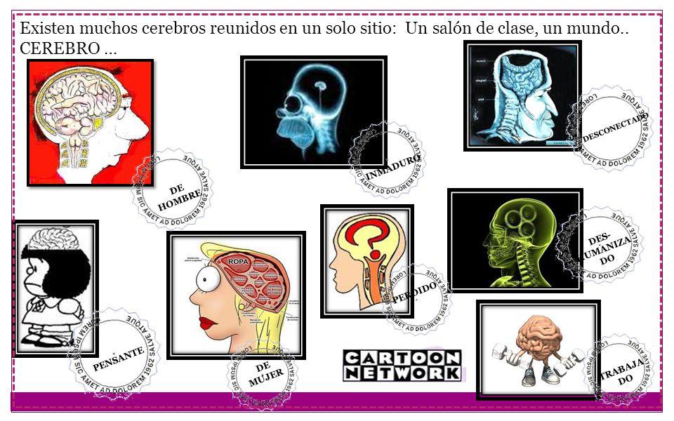 Existen muchos cerebros reunidos en un solo sitio: Un salón de clase, un mundo.. CEREBRO … DE MUJER PENSANTE INMADURO DE HOMBRE DESCONECTADO PERDIDO D