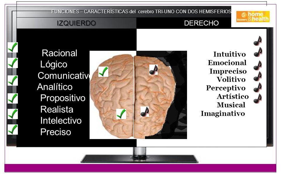 FUNCIONES – CARACTERÍSTICAS del cerebro TRI-UNO CON DOS HEMISFERIOS IZQUIERDODERECHO Racional Lógico Comunicativo Analítico Propositivo Realista Intel