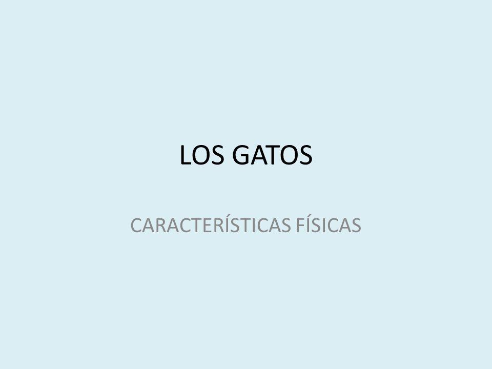 LOS GATOS CARACTERÍSTICAS FÍSICAS