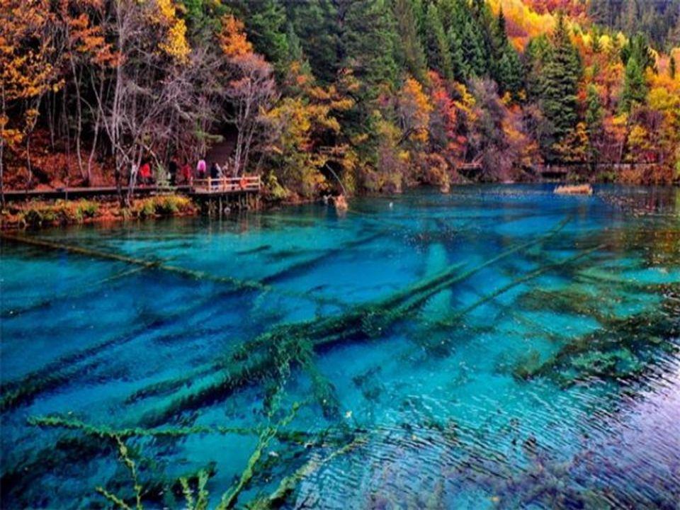 Valle de Jiuzhaigou.- China La laguna de cinco colores es una de las más pequeñas de este valle, pero la más impresionante.