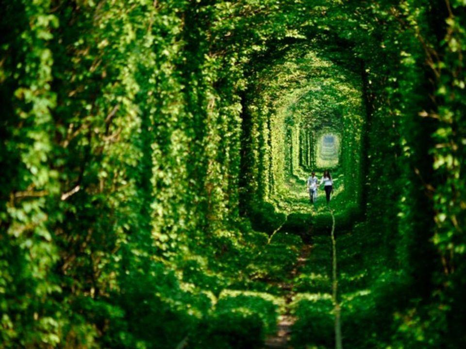El Túnel del Amor.- Ucrania Una vía férrea abandonada, situada a 350 kilometros de Kiev, se ha transformado en un lugar especialmente romántico frecuentado por muchas parejas.