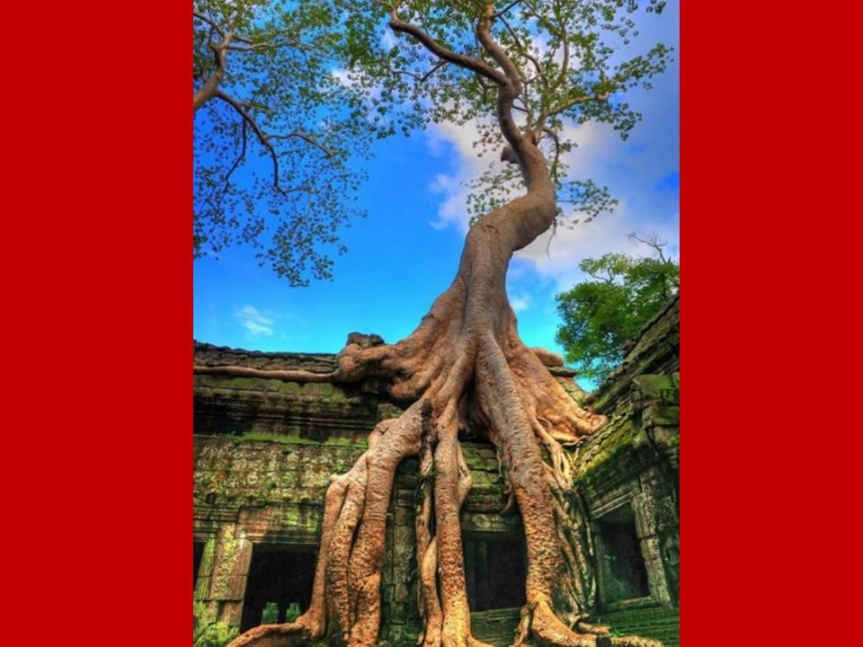 Angkor.- Camboya Es un enorme complejo de templos del siglo XII y constituye un lugar de gran interés histórico y cultural.