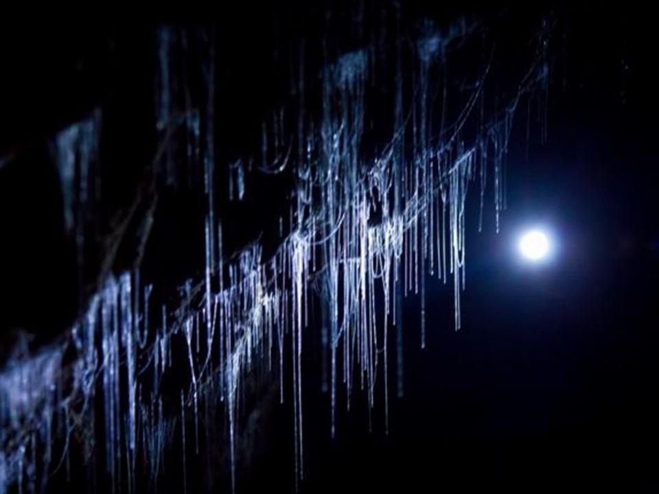 Cuevas de Waitomo.- Nueva Zelanda Estas cuevas poseen un gran atractivo, no sólo por su importancia histórica y geológica, sino por su población de luciérnagas.