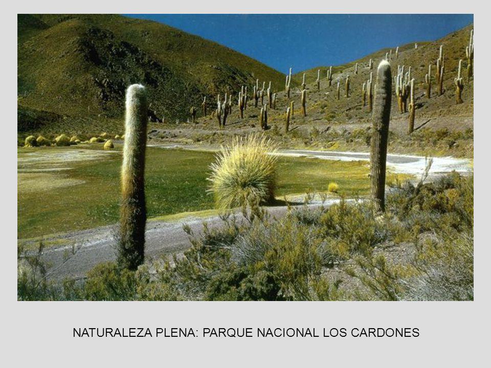 NATURALEZA PLENA: PARQUE NACIONAL LOS CARDONES