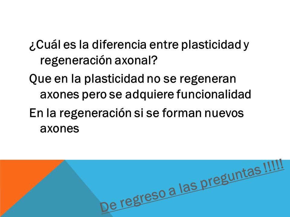 ¿Cuál es la diferencia entre plasticidad y regeneración axonal.