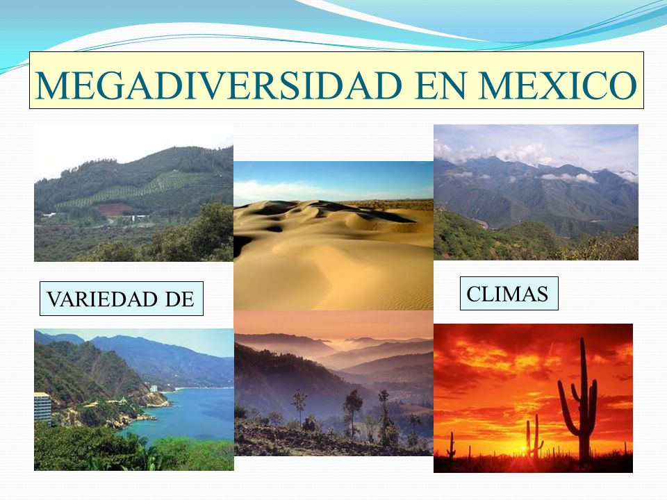 MEGADIVERSIDAD EN MEXICO VARIEDAD DE CLIMAS