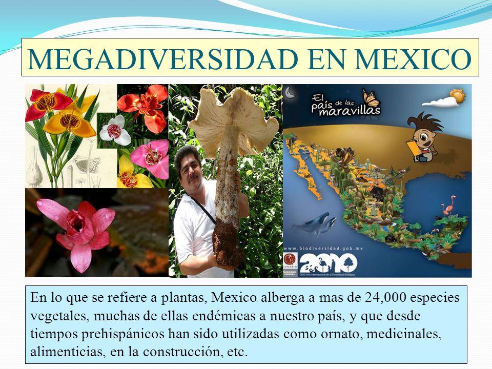 MEGADIVERSIDAD EN MEXICO En lo que se refiere a plantas, Mexico alberga a mas de 24,000 especies vegetales, muchas de ellas endémicas a nuestro país,